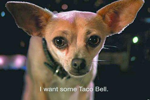 taco_bell_dog